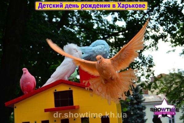 Цветные голуби в Харькове