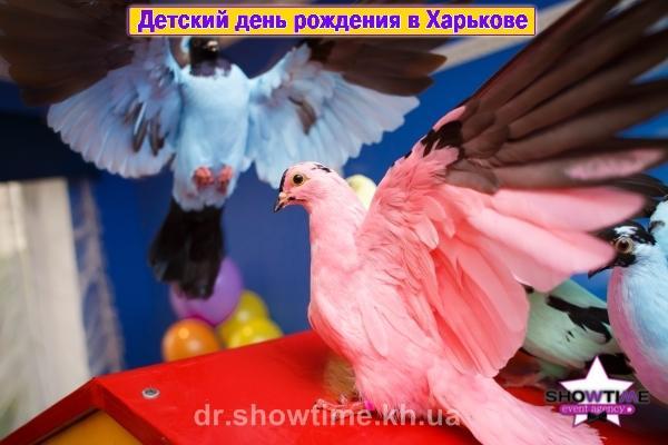 Цветные голуби в Харькове (3)